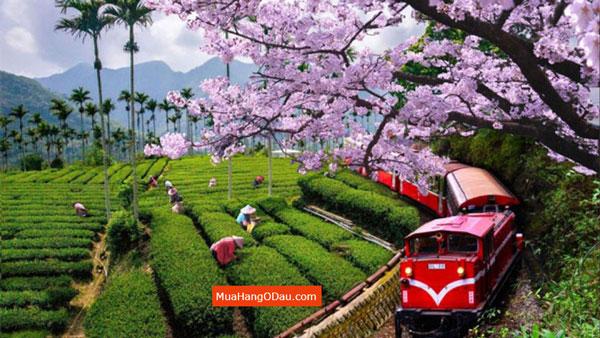 Lễ-Hội-Mùa-Xuân
