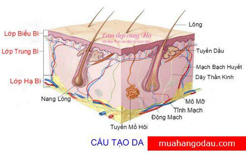 cau-tao-da-lamdepcungha-logo